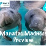Episode 15a: Manatee Madness in Crystal River Preview