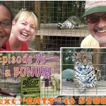 Episode 7c: BONUS – Big Cat Rescue